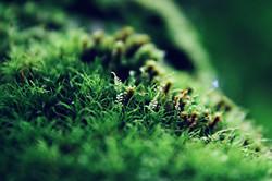 Micro plante