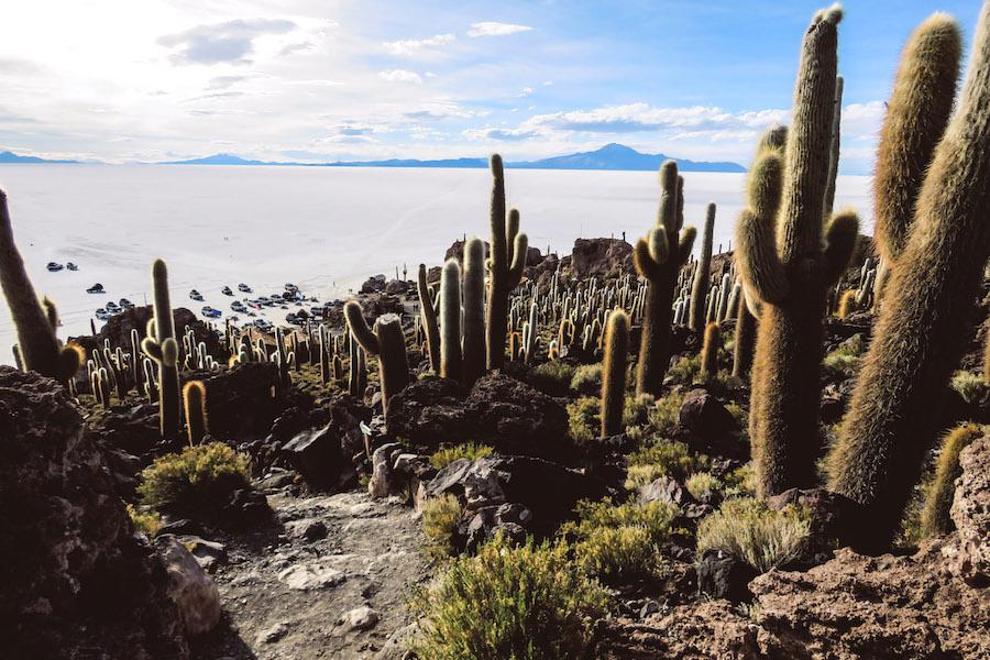 L'île au Cactus, Salar de Uyuni