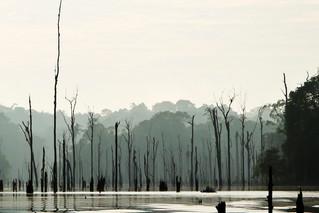 Le Lac de Petit Saut