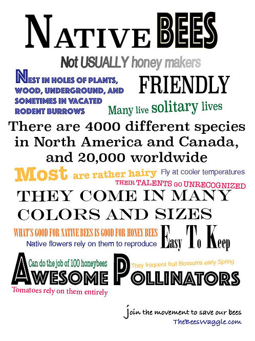 Native Bee Fact Poster