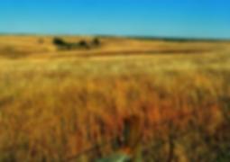 Screen Shot 2020-04-03 at 4.58.42 PM.png