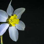 Paper White Flower
