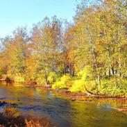 Tranquil Fall Stream