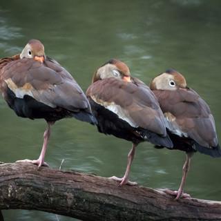 I've Go My Ducks In A Row