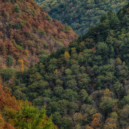 Autumn's Splendor