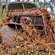 Chevy &Vines