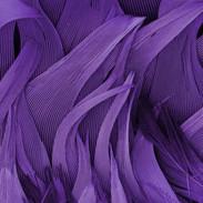 Purple Plumage