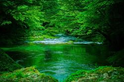 緑に溶ける