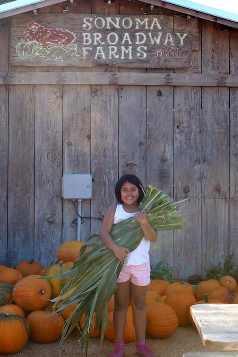 Corn Husk Harvesting