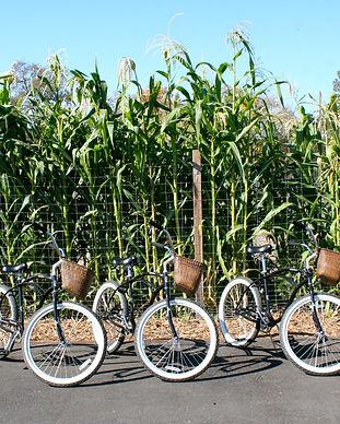 bikes_corn copy.JPG