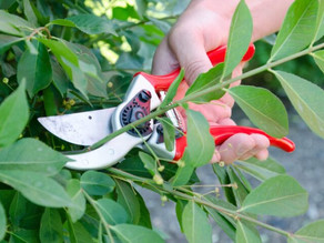 When and Why Do We Prune?