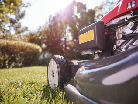 Tips to Maintain a Healthy Lawn: To Mow or Not to Mow