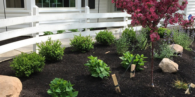 Front Yard Landscaping Bushes Trees Plants Lorain County Ohio