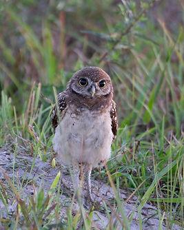 owls-5.jpg