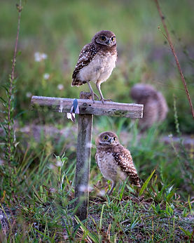 owls-3.jpg