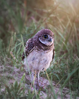 owls-4.jpg