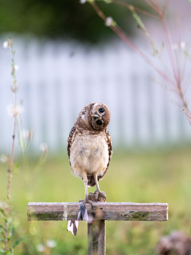 owls-2.jpg