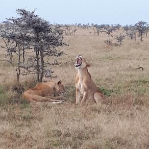La magie du Masai Mara