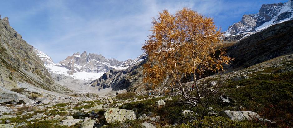 L'or des montagnes… C'est l'automne!
