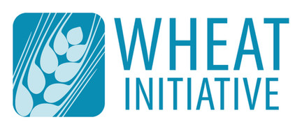 International Wheat Initiative