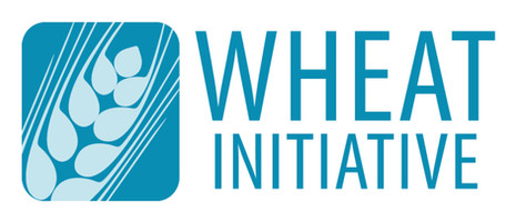 International Wheat Initiative