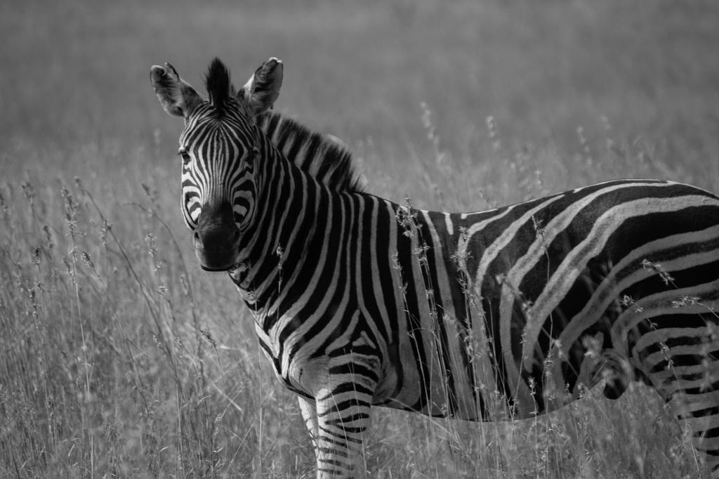 Bushveld Adventures