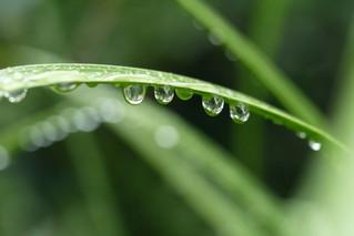 雨に関するオノマトピア/Onomatopoeia related to rain