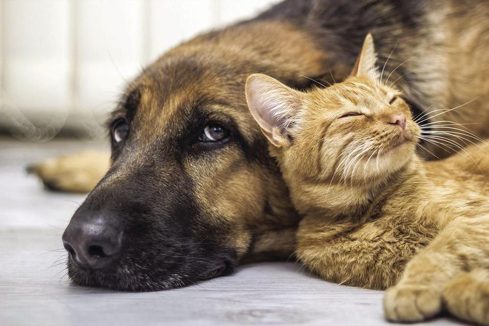 Mascotas en casa / Feng Shui