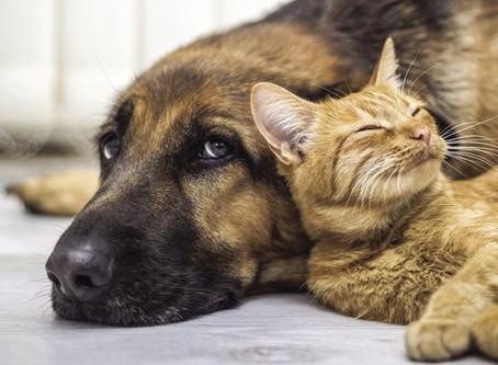 Mascotas y Feng Shui