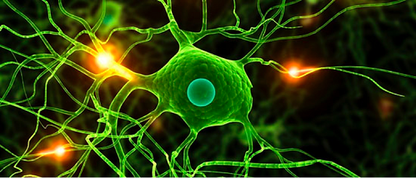 neurones.png