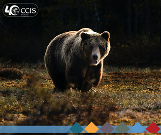 Animals of Alberta | Predators