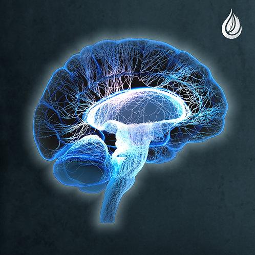 Neuro-Endocrine Calibration Session