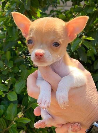PuppyMay2.jpg