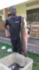 Semuntundu catfish held up by a local fi