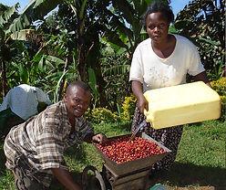 Farmers preparing coffee berries for pro