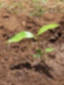 seedling 2.jpg