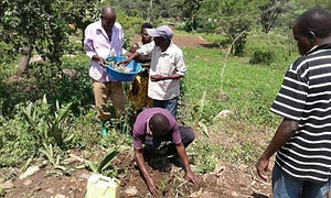 Villagers planting seedlings in amongst