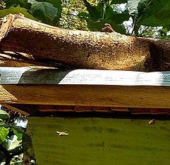 Suunu forest active beehive.jpg