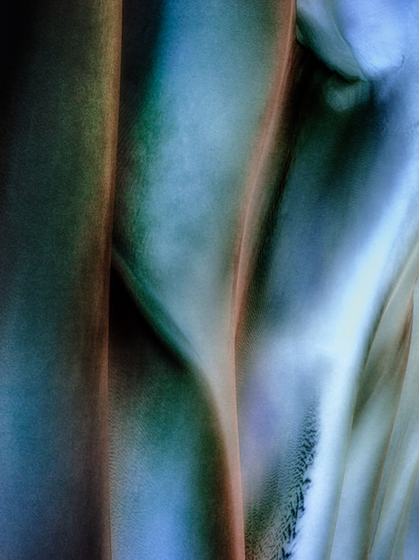 Ocean Lily