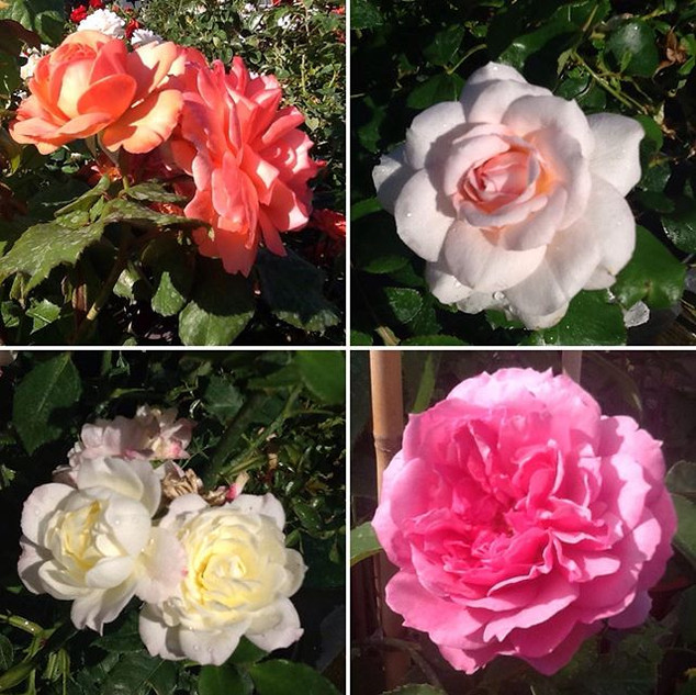 This weekend we have our roses on Buy 1