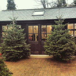 Quality #christmastrees now in stock._Tr