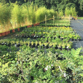 Some of this autumns #shrubs growing on