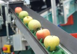 orleans apples.jpg