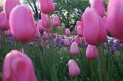 Rochester Flower City.jpg