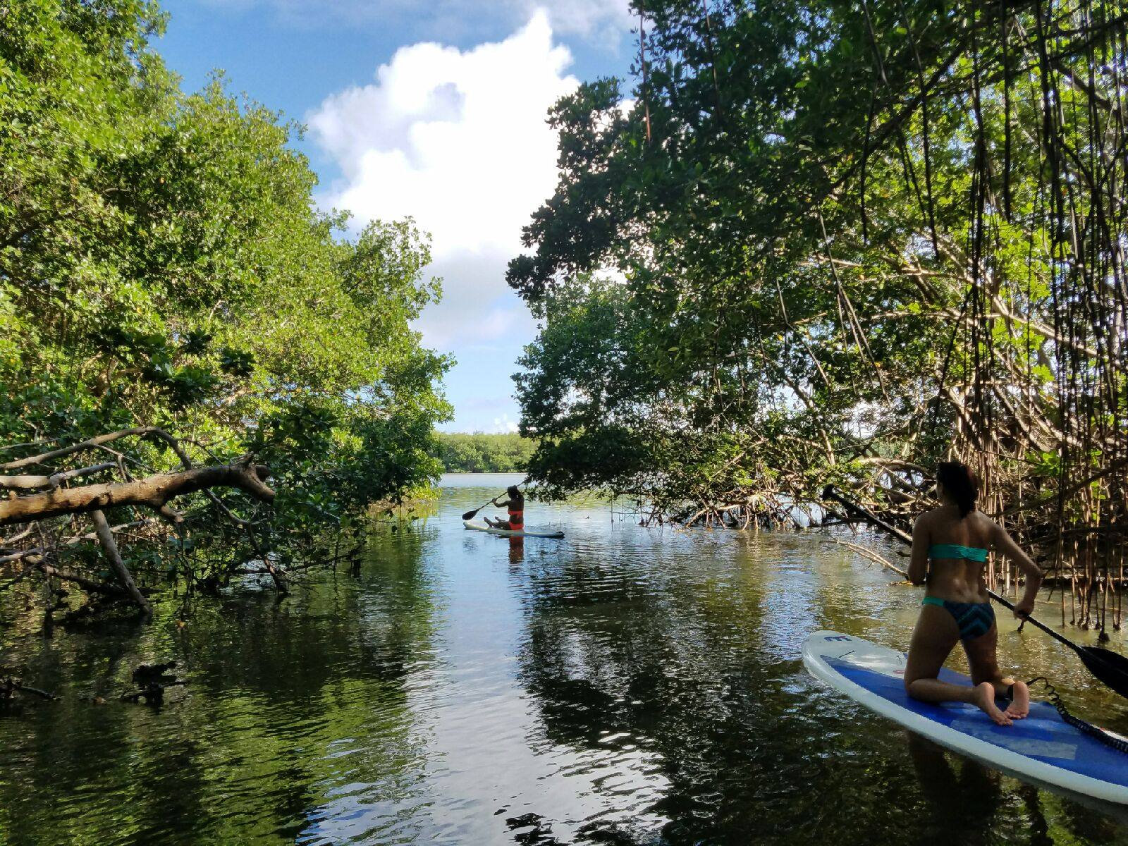 Paddleboard Adventure