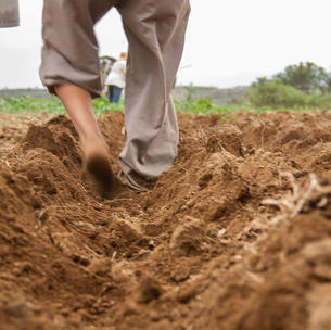 Sowing barefoot 3.jpg