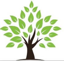 HD Tree.jpg