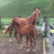 mum and baby horse.jpg