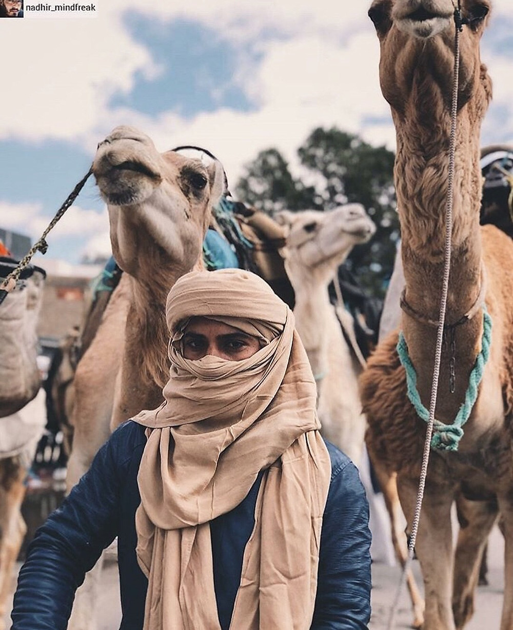 A Tuareg man surrounded by camels