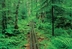 Ha-De-Ron-Dah Wilderness